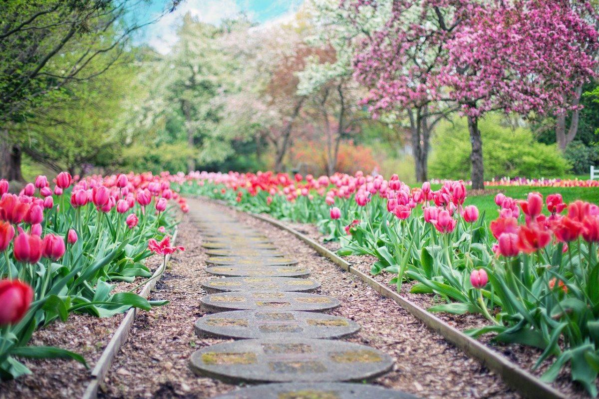Piękny ,a także schludny ogród to zasługa wielu godzin spędzonych  w jego zaciszu w trakcie pielegnacji.